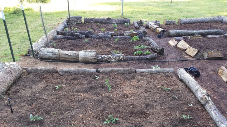 Beds have been established and now the planting begins.