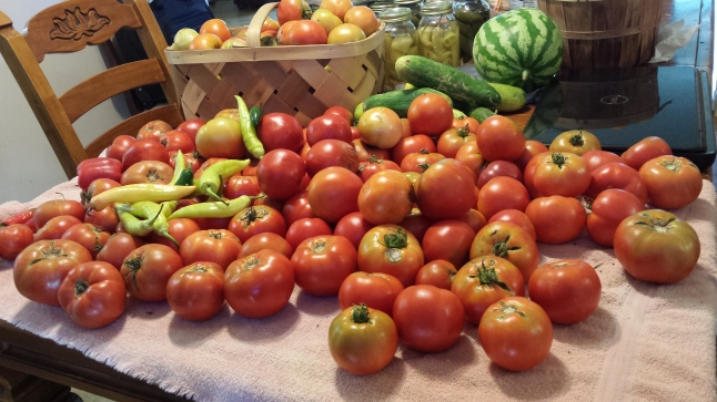 Marion and Rutgers tomatoes are some of the best tomato plants for producing the perfect canning tomatoes.